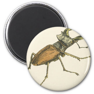 Stag Beetle 6 Cm Round Magnet
