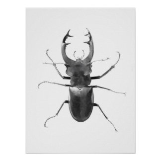 Stag Beetle Black & White Poster