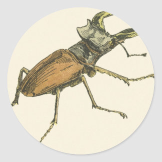 Stag Beetle Classic Round Sticker