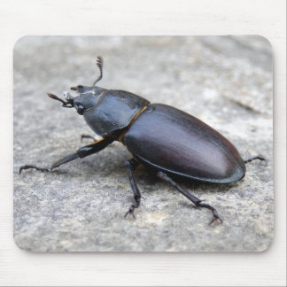 Stag Beetle Mouse Mat