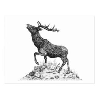 Stag - Blank Postcard
