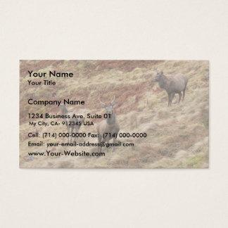 Stag Deers In Glencoe Business Card