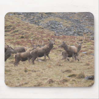 Stag Deers In Glencoe Mouse Pads
