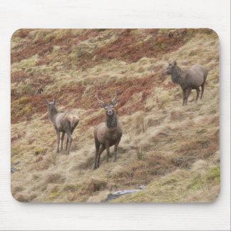 Stag Deers In Glencoe Mousepad