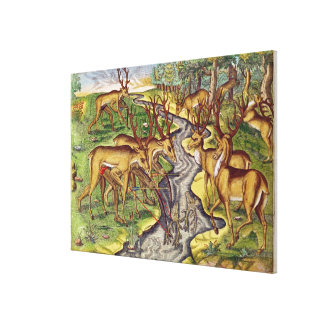 Stag Hunt, from 'Brevis Narratio' Canvas Print