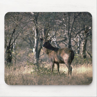Stag in forest mouse pad