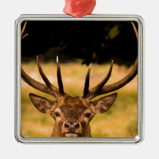stag of richmond park christmas ornament