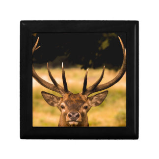 stag of richmond park gift box