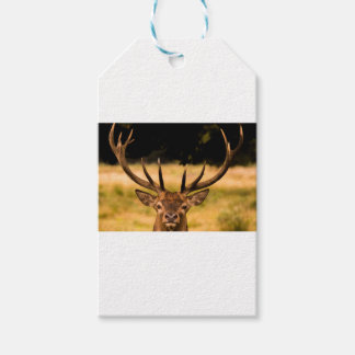 stag of richmond park gift tags