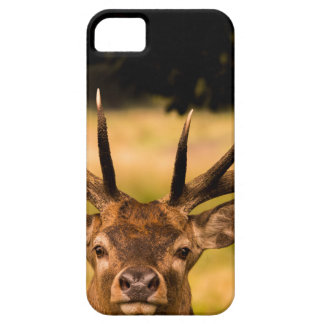 stag of richmond park iPhone 5 cover