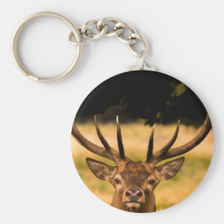 stag of richmond park key ring
