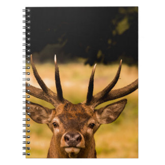 stag of richmond park notebooks