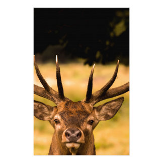 stag of richmond park stationery