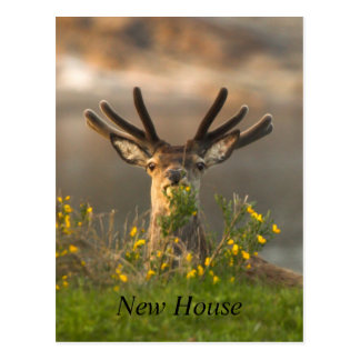 Stag Peering Over The Hill Postcard