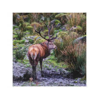 stag photograph canvas print