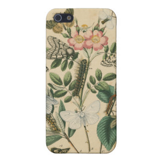 Stages of Butterfly Life by Vision Studio iPhone 5/5S Cases