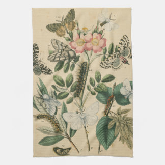 Stages of Butterfly Life by Vision Studio Kitchen Towels