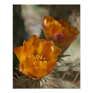 Staghorn Cholla Cactus Blossoms Poster