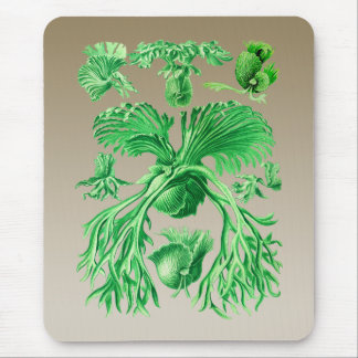Staghorn Fern Mouse Pad