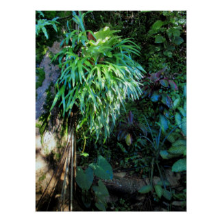 Staghorn Fern Posters