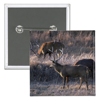Stags in grass buttons