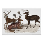 STAGS  PRINT