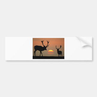 stags sunset.jpg bumper sticker