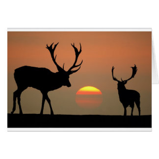 stags sunset.jpg card