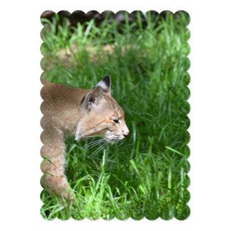 Stalking Bobcat Cards