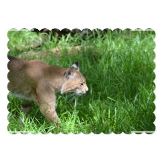 Stalking Bobcat 13 Cm X 18 Cm Invitation Card