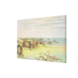Stalking buffalo canvas print