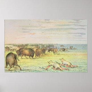 Stalking buffalo poster