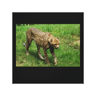 Stalking Cheetah Canvas Print