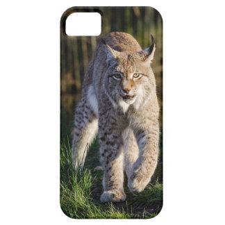 Stalking Eurasian Lynx iPhone 5 Covers