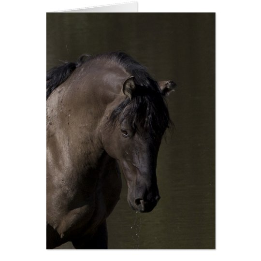 Stallion at the Waterhole Wild Horse Greeting Card