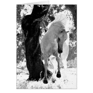 Stallion Dances Horse Greeting Card