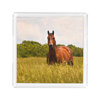 Stallion Horse Serving Tray