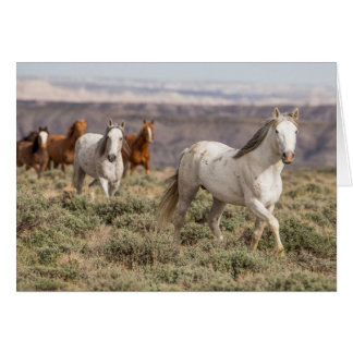 Stallion Leads the Way Wild Horse Greeting Card