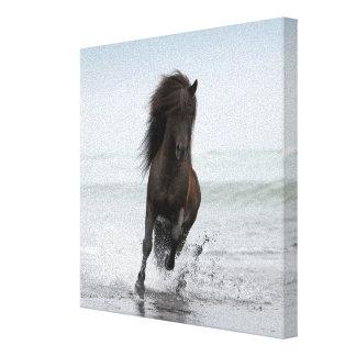 Stallion Running On Beach   North Atlantic Canvas Print