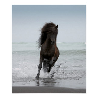 Stallion Running On Beach | North Atlantic Poster