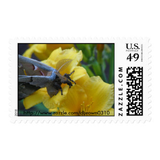 Stamp set, Moth on Day Lily