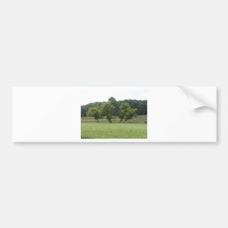 Stand of Trees in the Countryside Car Bumper Sticker