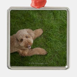 standard poodle 2 christmas ornament