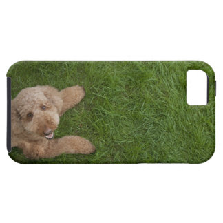standard poodle 2 iPhone 5 covers
