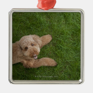 standard poodle 2 Silver-Colored square decoration