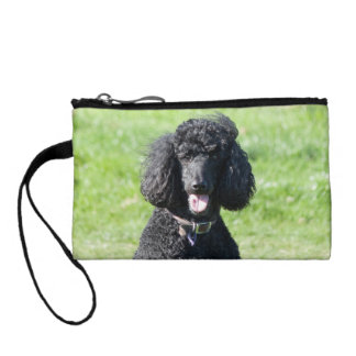 Standard Poodle dog black beautiful photo Coin Purse