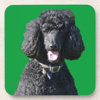 Standard Poodle dog black beautiful photo portrait Beverage Coasters