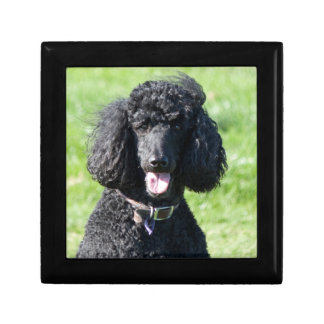 Standard Poodle dog black beautiful photo portrait Gift Box
