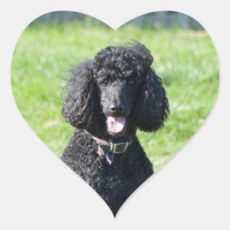 Standard Poodle dog black beautiful photo portrait Heart Sticker