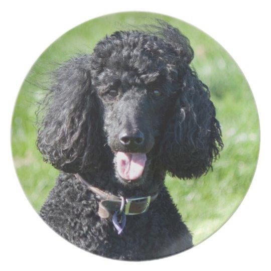 Standard Poodle dog black beautiful photo portrait Plate